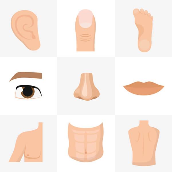 คําศัพท์ภาษาอังกฤษร่างกาย ตา หู จมูก ปาก ร่างกายภาษาอังกฤษ เขียนอย่างไร - สถาบันสอนภาษาอังกฤษ EduFirst