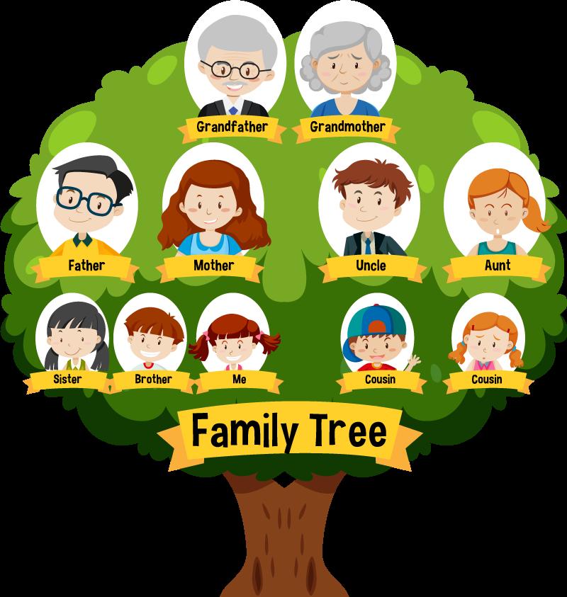 Family Tree (ผังครอบครัว) แผนภูมิแสดงลำดับครอบครัว หรือ เครือญาติ